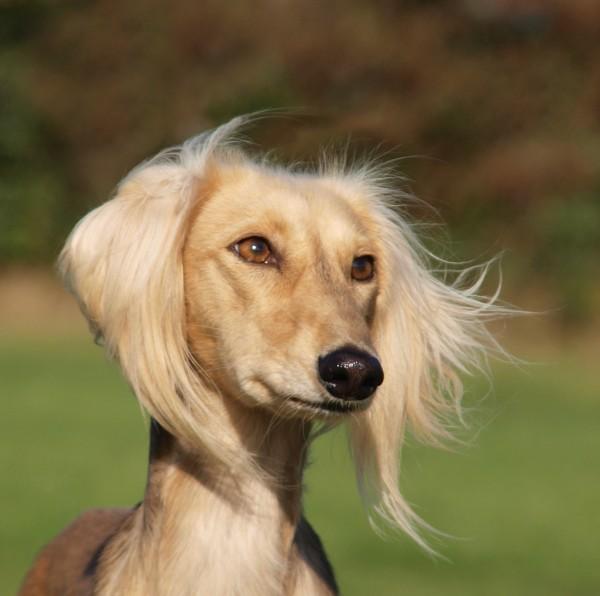 profil zwierze domowe portret potrait spojrzenie