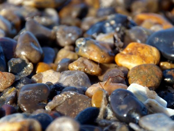 kamien pestka muszla skaly skala kolor