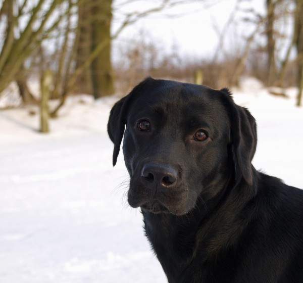 portret psa na sniegu