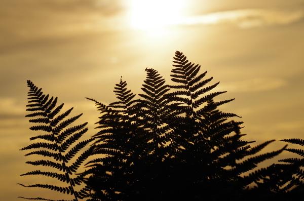 abendlicht patrzec widok outlook fernsicht panorama