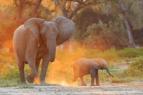 jazda podrozowanie kolor zenski zwierze ssak