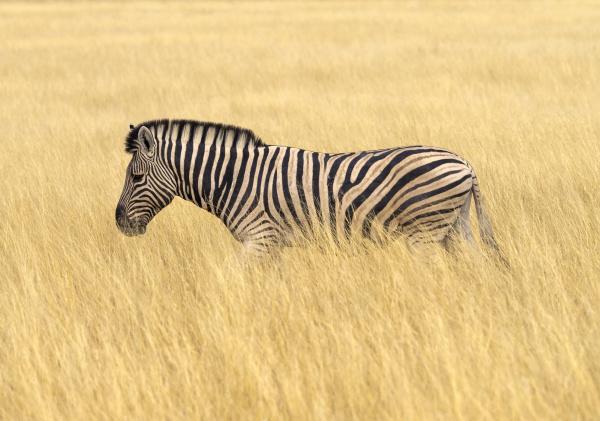 chodzenie zwiedzanie zwierze ssak park narodowy