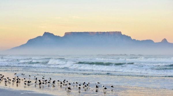 krajobraz, z, mewami, na, plaży, i - 28215159