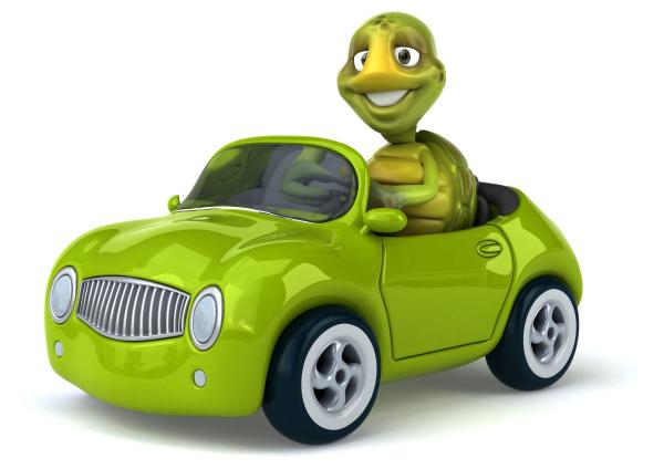 zabawny, żółw - 28218090