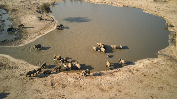 widok sloni z drona w wodopoju
