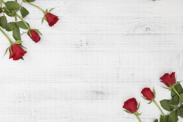 czerwona roza na bialym drewnianym tle