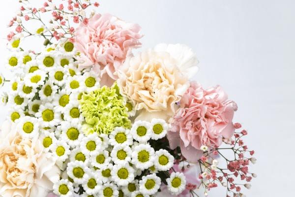 tlo piekne kwitna kwitnace botaniczne bukiet