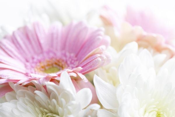 martwa, natura, kwiatów, na, białym, tle - 29263318