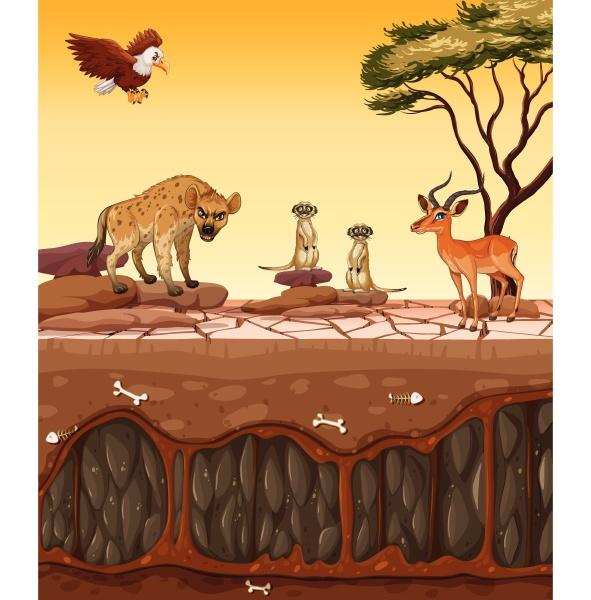 suchy, ląd, i, dzikie, zwierzęta - 30402666