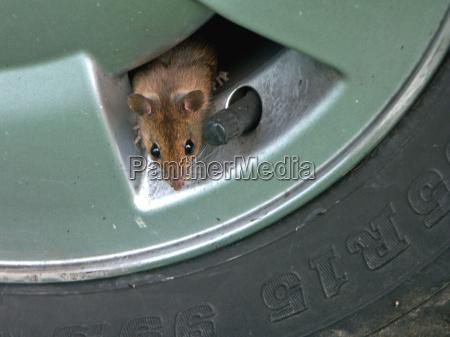 hurray nowa dziura myszy