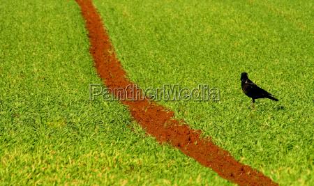 zwierze ptak zielony gospodarstwo rolnictwo pole