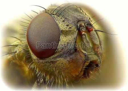 makro zblizenie close up zdjecia macro