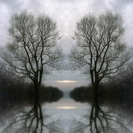 drzewo drzewa zimno chlod mgla wieczor