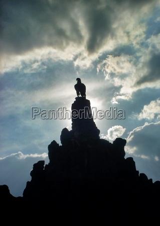 niebieski pomnik kamien pestka ptak czern