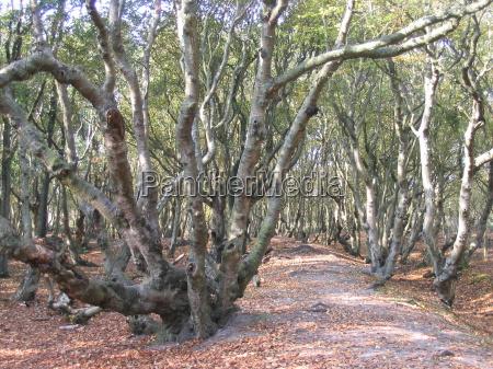 drzewo drzewa aste oddzial gewirr sam