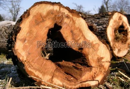 detal drzewo drewno drewna energia elektrycznosc