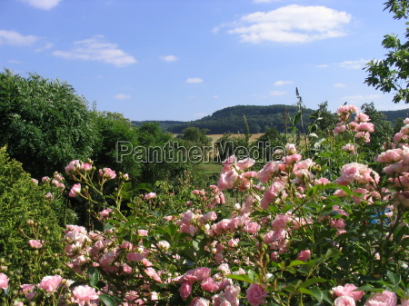ogrod ogrodek lato letni odleglych roz