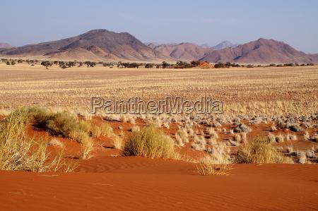 na skraju pustyni namib