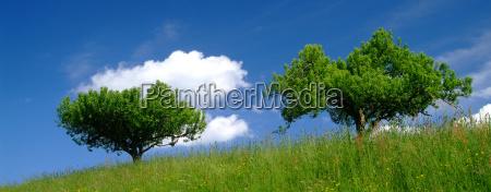 drzewo z nieba 4