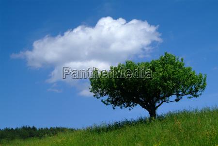 drzewo z nieba 2