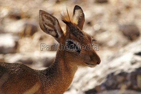 park narodowy afryka namibia oko narzadow