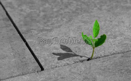 kamien pestka zielony beton natomiast delikatny