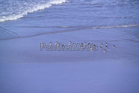 ptak nad morzem