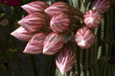 cactus magic 2