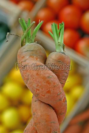 warzywo polykac marchew marchewka pomarancza liebhaben