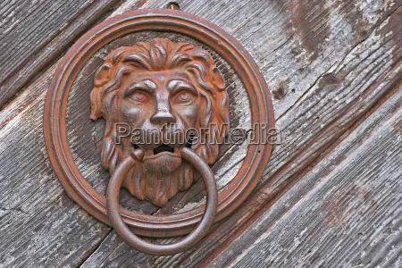 lew kot kot drapiezny drzwi door