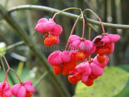 owoc owoce owocowe galazka krzew pomarancza