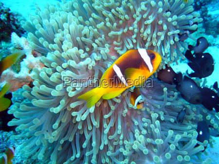 ryba podwodne morskich aqua wodne wodna