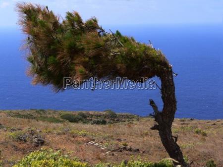 drzewo urlop urlop wypoczynkowy swieto wakacje