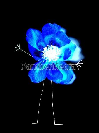 niebieski ogrod ogrodek sadzenie sadzic kwiat