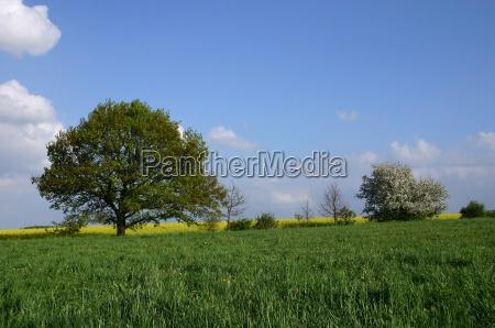 niebieski drzewo drzewa rozkwitac kwitnienie kwiaty