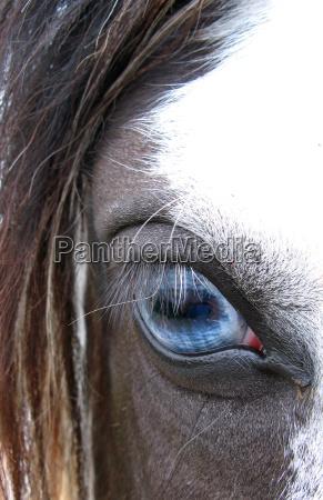 kon oko narzadow oczy spojrzenie szuka