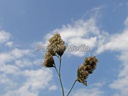 kwiat kwiatek zawod roslina oblok chmura