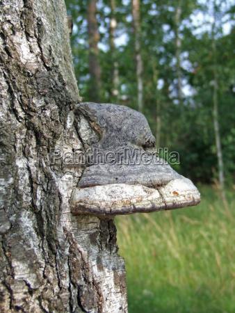 drzewo drewno drewna trunk ochrony kora