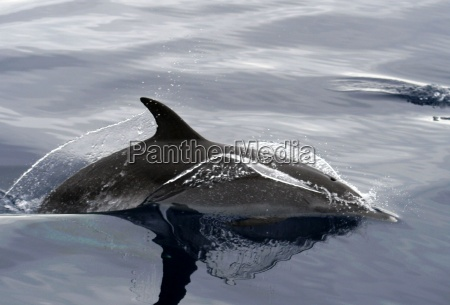 zwierze ssak lebewesen morskich aqua wodne