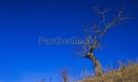 niebieski drzewo ochota hang tendencja wymagaja