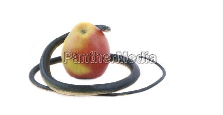 jablka jablka jablko jablko przyneta pokusa