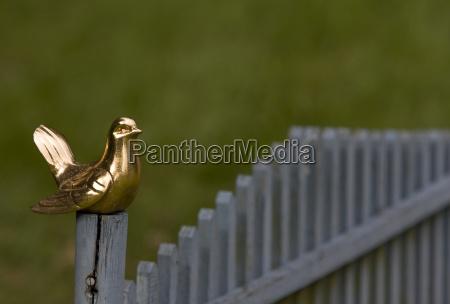 golden bird