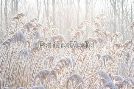 zima zimowy zimno chlod snieg koks