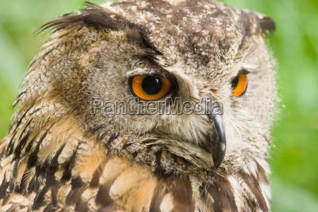 zwierze ptak zwierzeta zwierzatka ptaki sowa