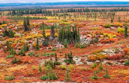 tundra krajobraz jesienia kolor
