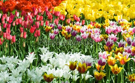 kwiat kwiatek zawod roslina kwiaty kwiatki