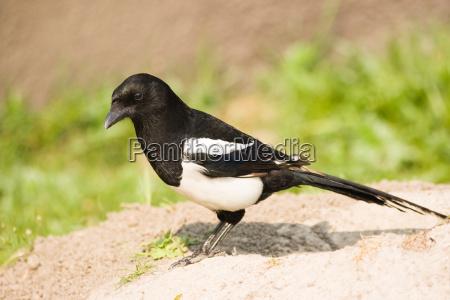 zwierze ptak zwierzeta zwierzatka ptaki biel