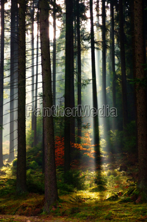 drzewo drzewa myslec wegetacja spirytus medytowac