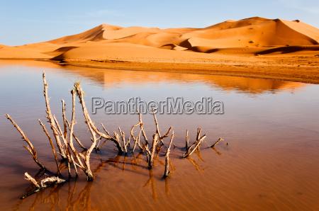 suchej rosliny w pustynnym jeziorze