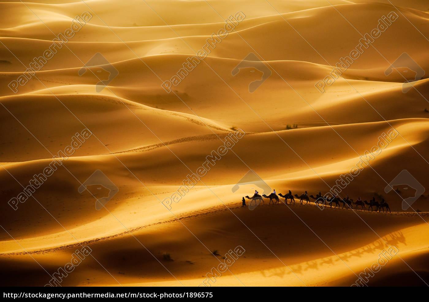 camel, caravan - 1896575